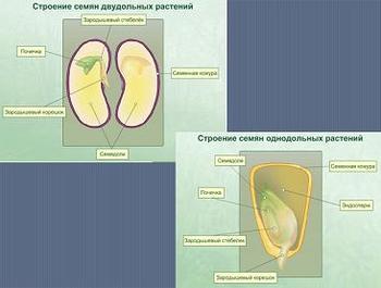 Биохимия организма человека презентация